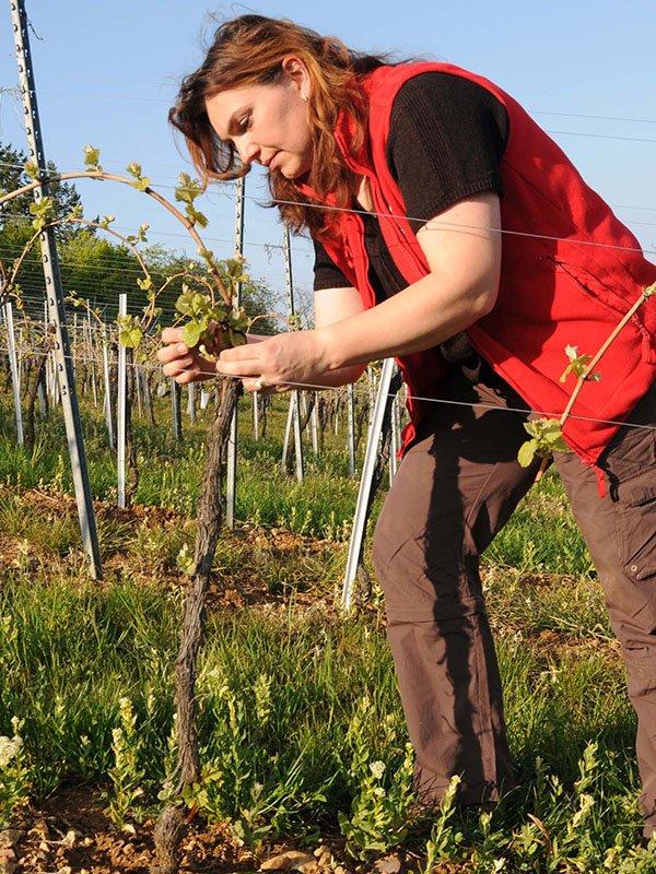 muriel dans les jeunes vignes domaine gueth