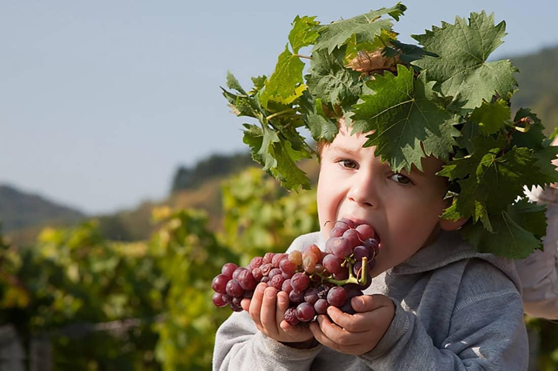 jules mange du raisin au domaine gueth
