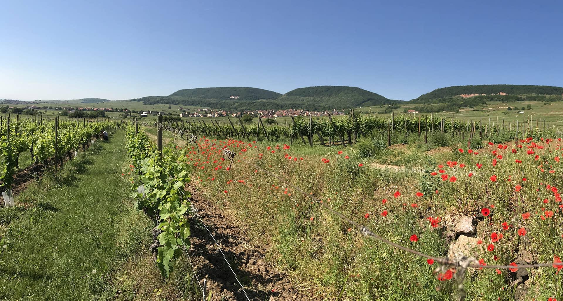 Domaine GUETH Vignes